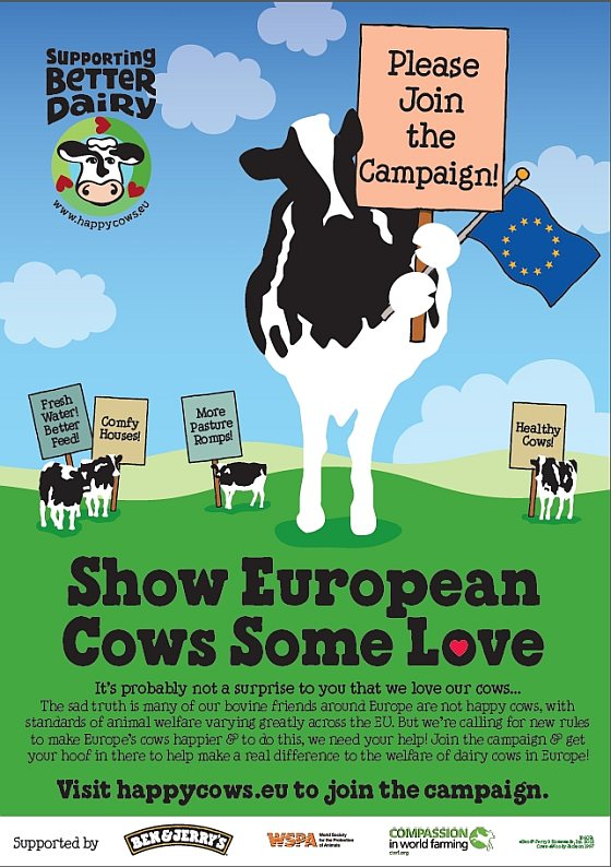 Happy Cows poster - koeiendans