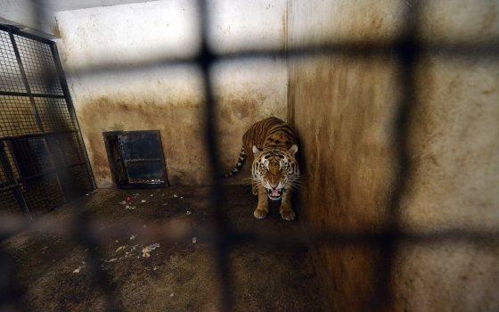 Harun in zijn oude verblijf in Onesti - dierentuin