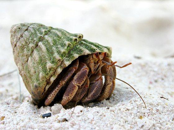 Heremietkreeft - Recyclende dieren
