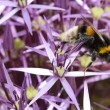 Grootste studie ooit, bijen sterven door pesticiden