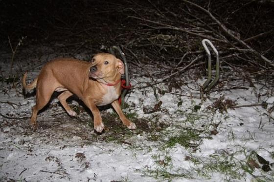 Hond achtergelaten Heerenveen