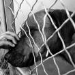 """Ineke van Herwijnen: De """"superuser"""" onder de hondenbezitters"""