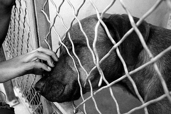 Hond asiel superuser
