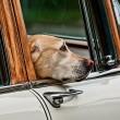Zomerse temperaturen: laat je hond niet in de auto!