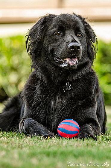 Hond met bal - twaalf dingen