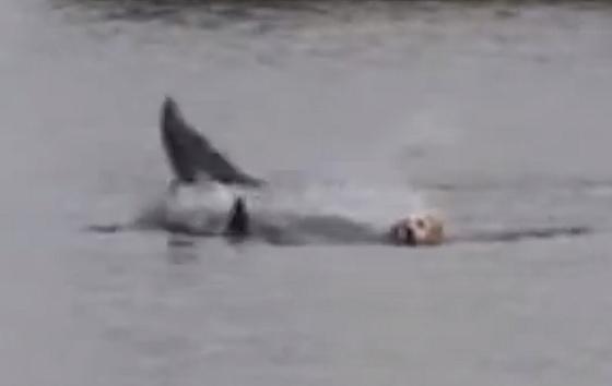 Hond Ben en dolfijn Doogie spelen