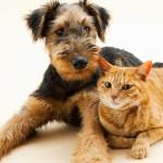 Hond en kat - castreren