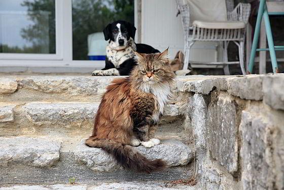 hond en kat - mensenrechten