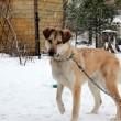 Humane Society neemt dieren in beslag tijdens kou in Canada
