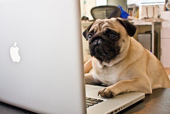 Hond op kantoor - werkplek