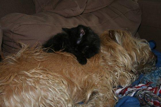 Hond en kat vaccineren