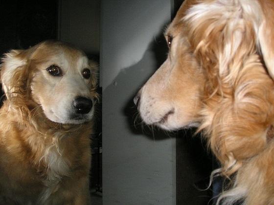 eeneiige hondentweeling