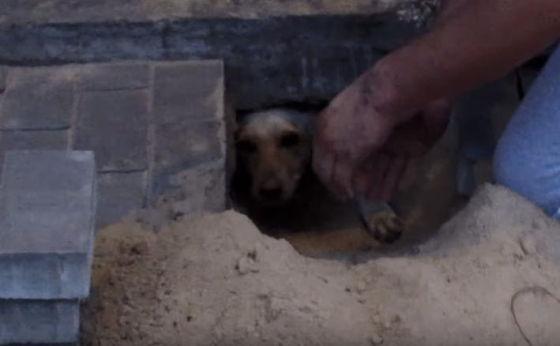 Hond levend begraven