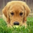Koninklijke Hondenbescherming voorstander van verplichte cursus