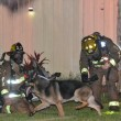 #GNvdD: Hond leidt brandweer naar kinderen in brandend huis