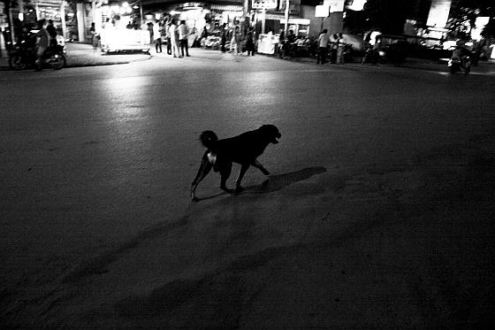 Hond in de stad
