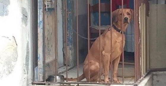 Hond op balkon - Trapani