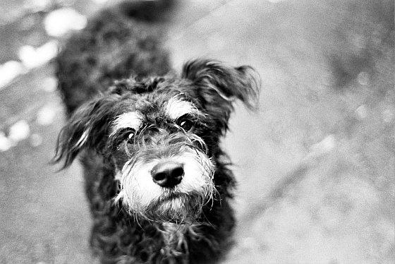 Hond - Kadera