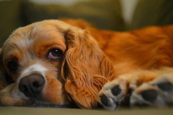 Hond - betaling vooraf