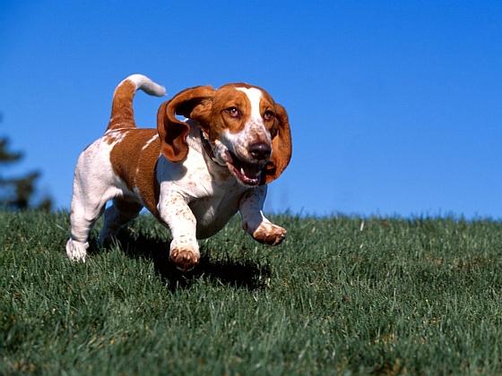 Hond - kerstverlichting