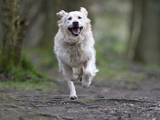 Hond - hondenhater