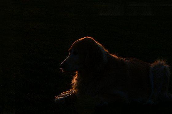 hond demente ouderen