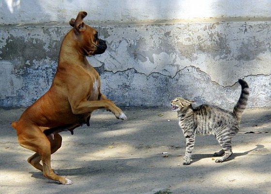 Honden bang van katten