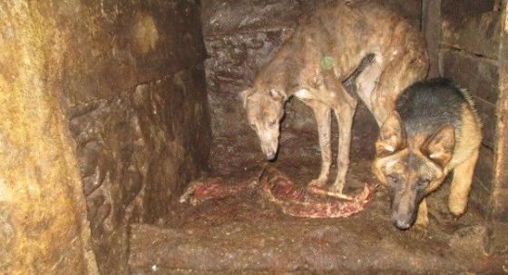 Ierse dierenbescherming