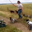 #GNvdD: Honden in rolstoel spelen met stok (video)