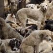 Bont voor Dieren doet verslag van hondenvleesfestival Yulin