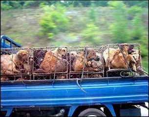 Honden bontindustrie China