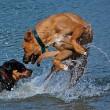 Piet Hellemans: Weekendje naar Zeeland met je hond(en)