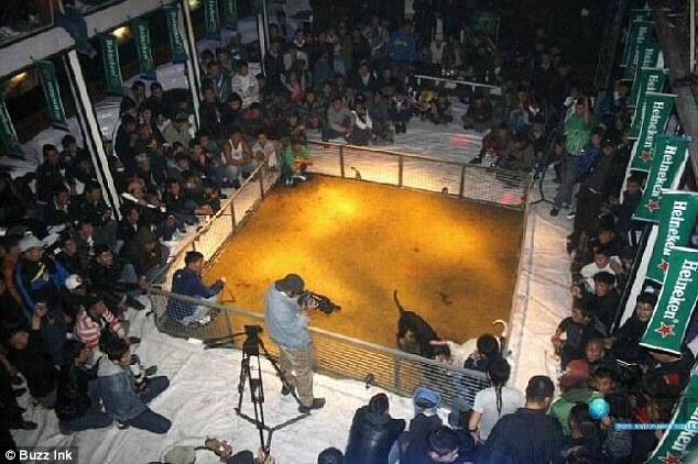 Hondengevechten Heineken