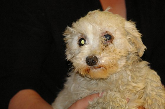 Aangetroffen verwaarloosd hondje - puppyhandelaren