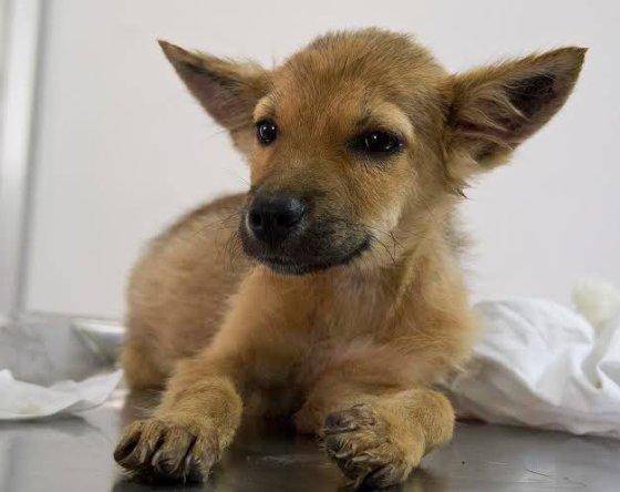 hondenvleesmaffia