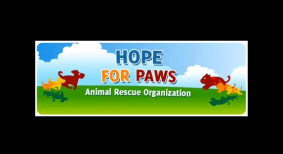 Hope for Paws - hondje Chase