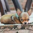 Karen's blog – De horror-hondenhandel