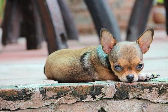 horror-hondenhandel