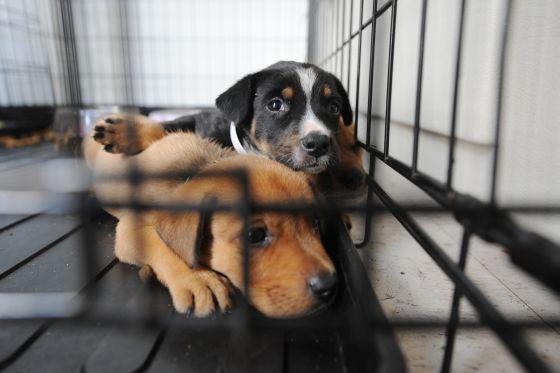 Crisis treft huisdieren