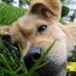 5500 Amsterdamse huisdieren minima gratis medisch behandeld
