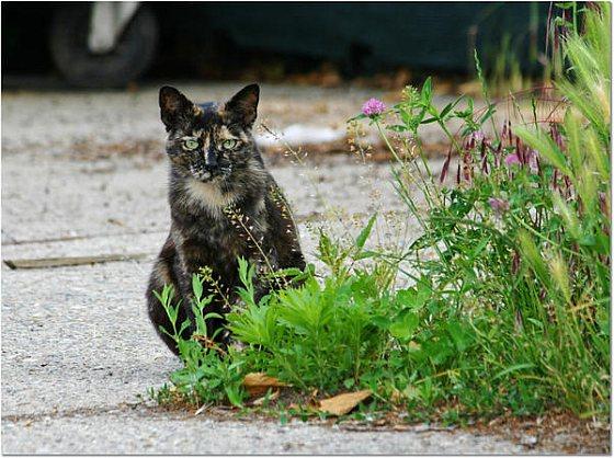 Katten Londen
