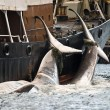 Walvisjacht IJsland weer van start