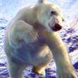 Migratie ijsberen te volgen via webcam