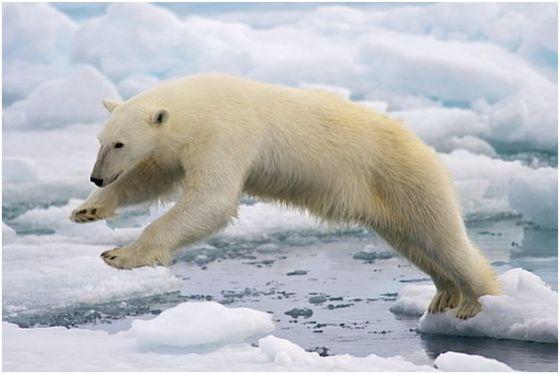 ijsbeer Beaufortzee