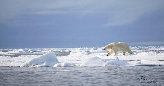 zee-ijs