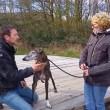Bert van Straten: Galgo Iker, verscheurd tot op het bot!