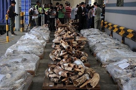 In beslag genomen ivoor Hong Kong