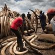 Harde anti-stroperij aanpak door president Tanzania
