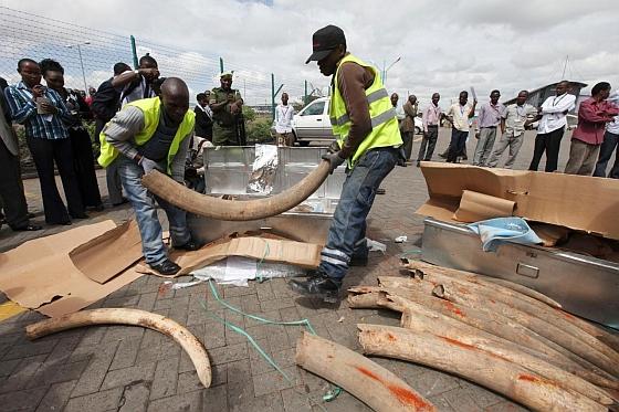 Illegale ivoorhandel