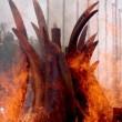 Botswana weigert ivoorverbranding
